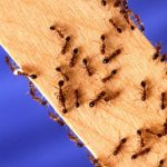 Outdoor Pests (and What You Can Do to Keep Them Away)!