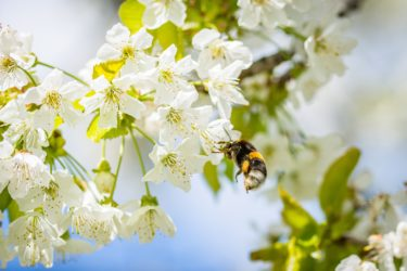 Pollen Is Here! 4 Ways to Make Your Home Beautiful This Spring.