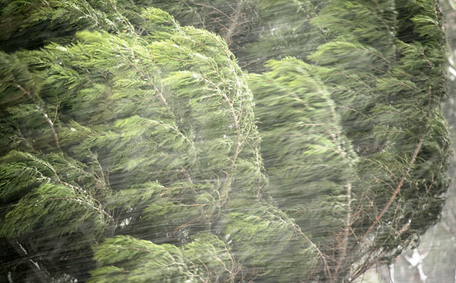 filing a wind damage claim to homeowners insurance